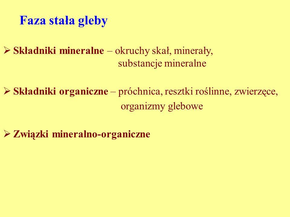 Faza stała gleby Składniki mineralne – okruchy skał, minerały,