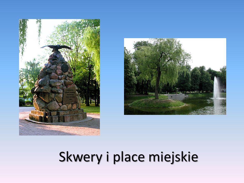 Skwery i place miejskie