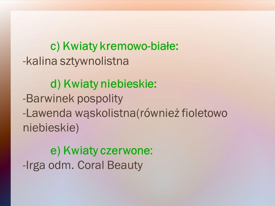 c) Kwiaty kremowo-białe: