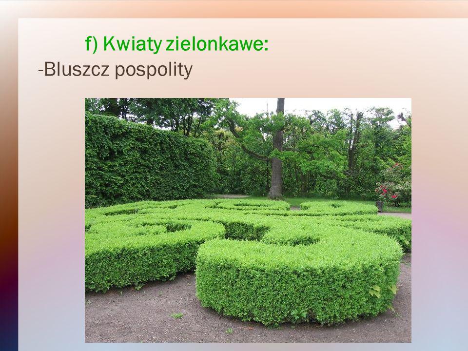 f) Kwiaty zielonkawe: -Bluszcz pospolity