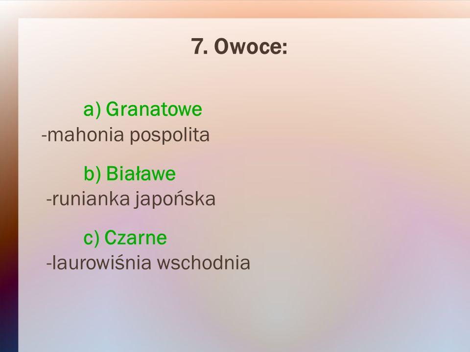 7. Owoce: a) Granatowe -mahonia pospolita b) Białawe