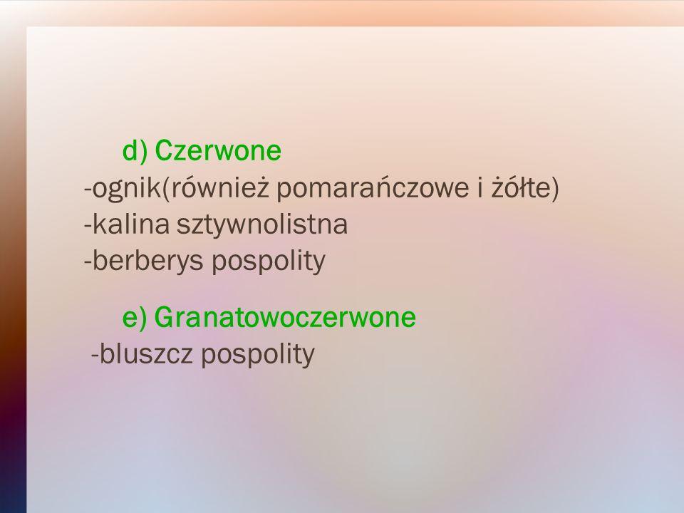 d) Czerwone -ognik(również pomarańczowe i żółte) -kalina sztywnolistna. -berberys pospolity. e) Granatowoczerwone.