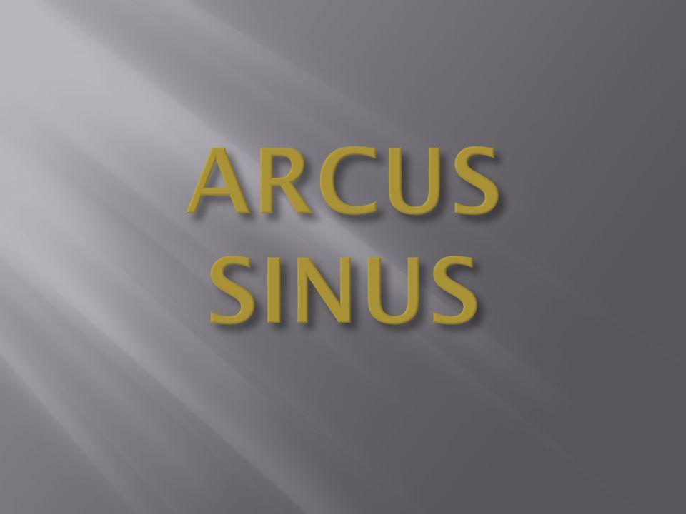 ARCUS SINUS