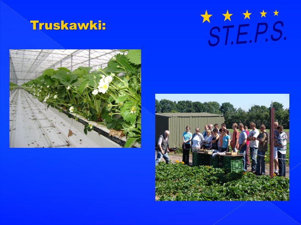 ST.E.P.S. Truskawki:
