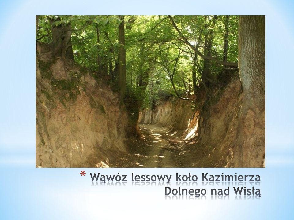 Wąwóz lessowy koło Kazimierza Dolnego nad Wisłą
