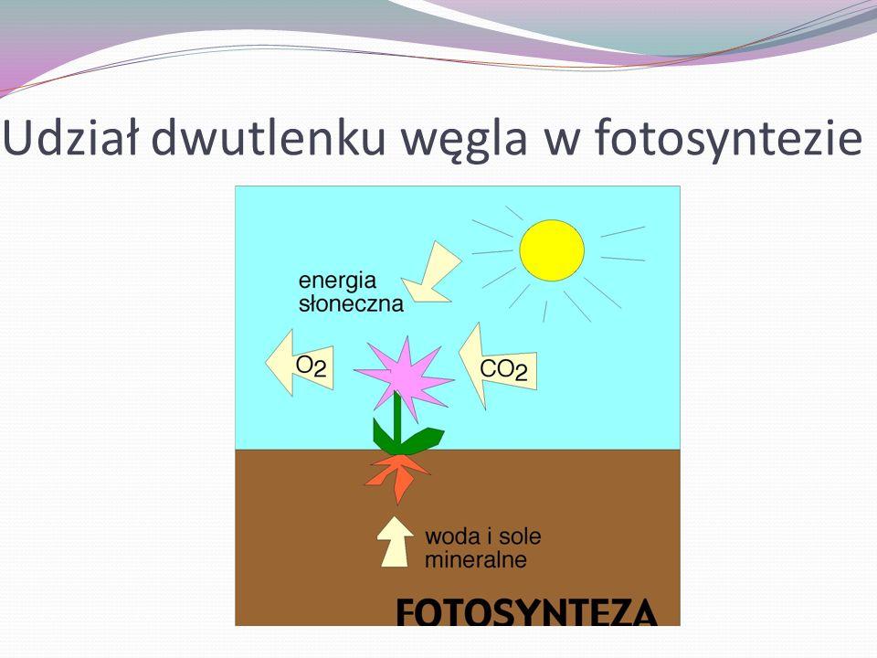 Udział dwutlenku węgla w fotosyntezie