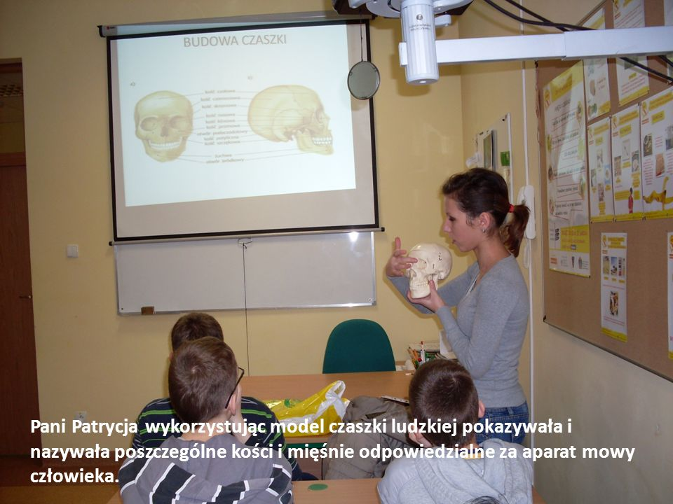 Pani Patrycja wykorzystując model czaszki ludzkiej pokazywała i nazywała poszczególne kości i mięśnie odpowiedzialne za aparat mowy człowieka.