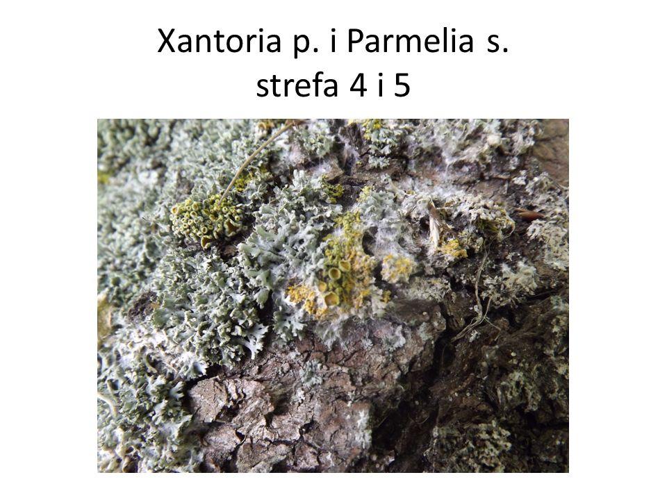 Xantoria p. i Parmelia s. strefa 4 i 5