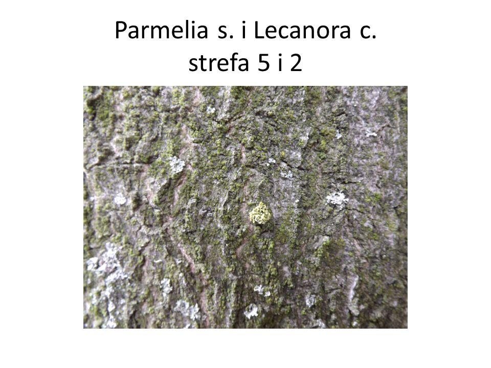 Parmelia s. i Lecanora c. strefa 5 i 2