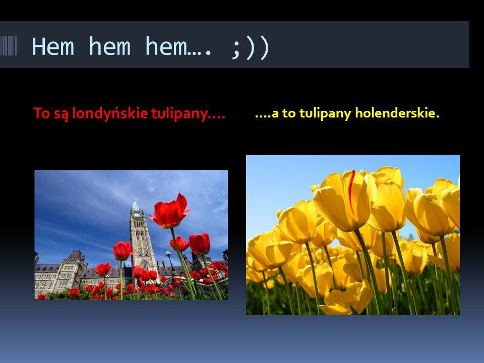 Hem hem hem…. ;)) To są londyńskie tulipany….