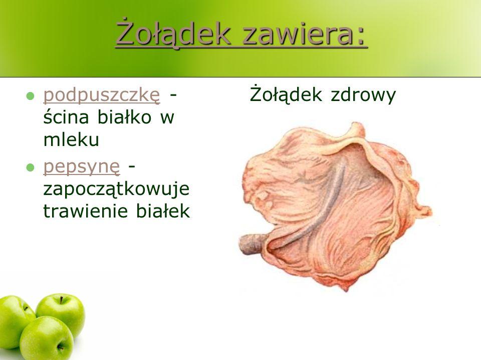 Żołądek zawiera: podpuszczkę - ścina białko w mleku