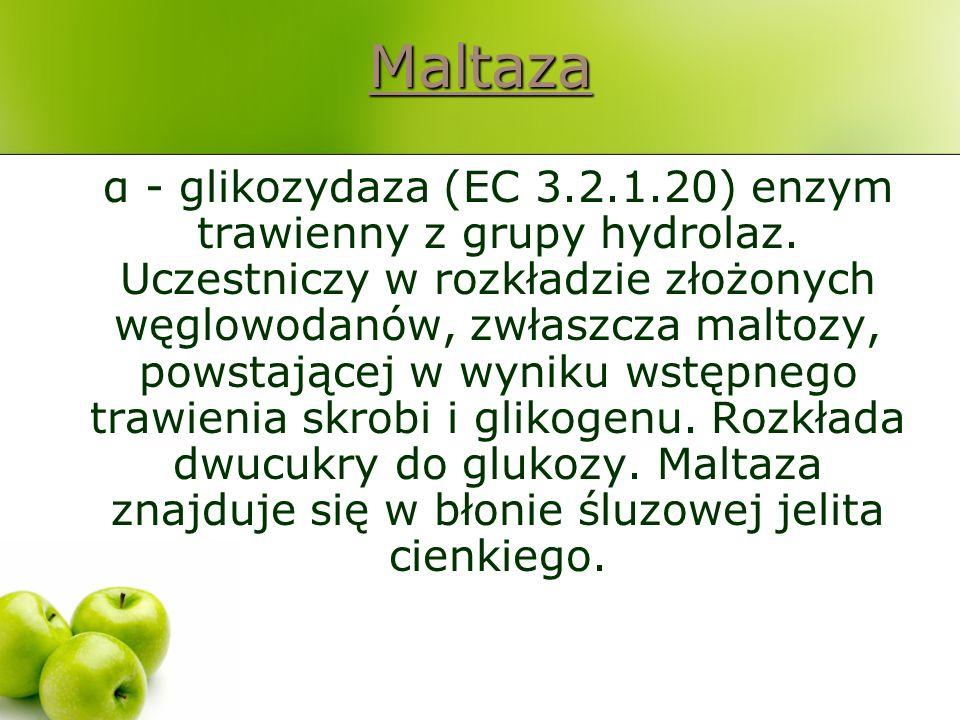 Maltaza