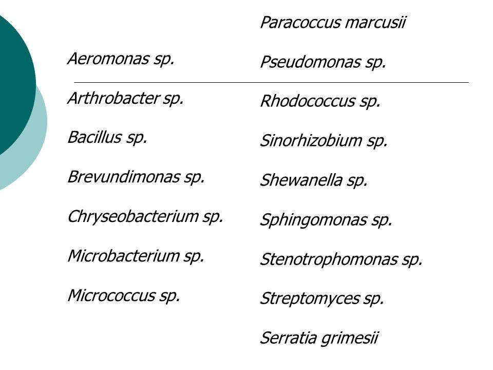 Paracoccus marcusii Pseudomonas sp. Rhodococcus sp. Sinorhizobium sp. Shewanella sp. Sphingomonas sp.