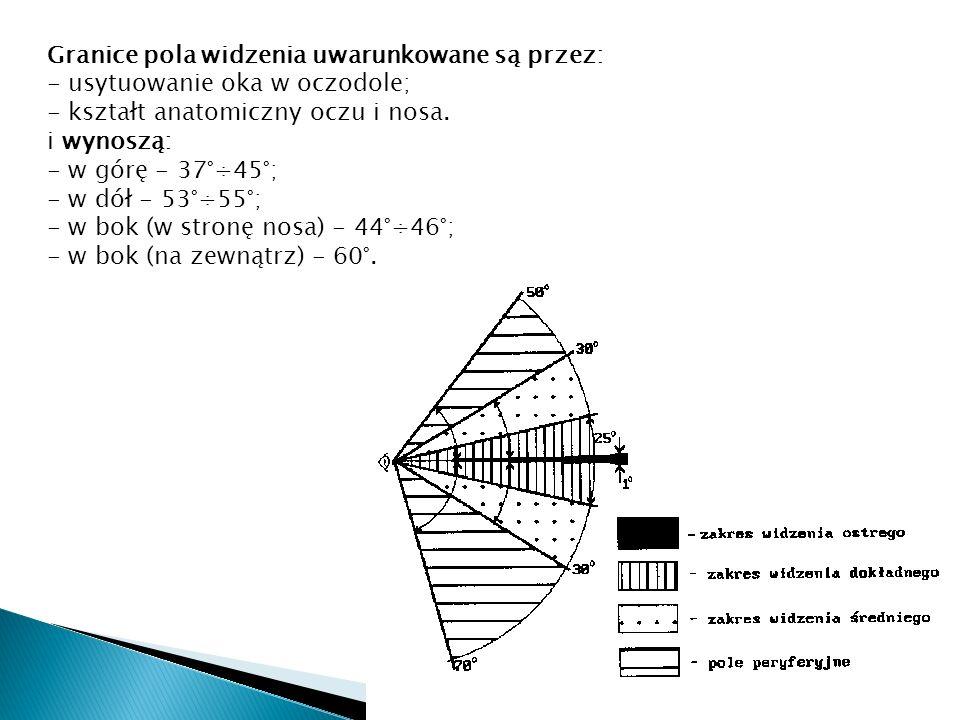 Granice pola widzenia uwarunkowane są przez: