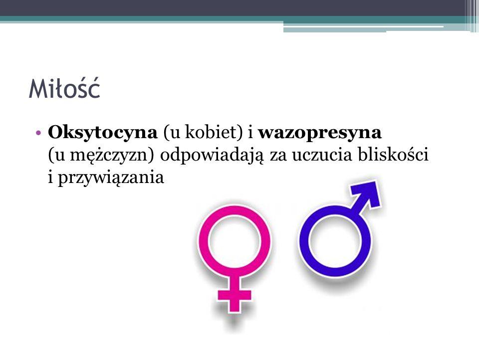 Miłość Oksytocyna (u kobiet) i wazopresyna (u mężczyzn) odpowiadają za uczucia bliskości i przywiązania.