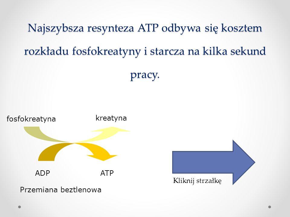 1. Wysiłki trwające kilka sekund Zasoby komórkowe ATP zawierają zasoby energii wystarczające jedynie na kilka pobudzeń. Najszybsza resynteza ATP odbywa się kosztem rozkładu fosfokreatyny i starcza na kilka sekund pracy.