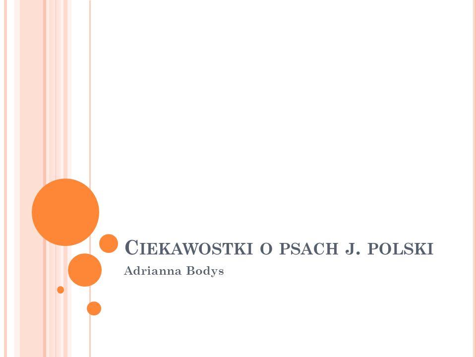 Ciekawostki o psach j. polski