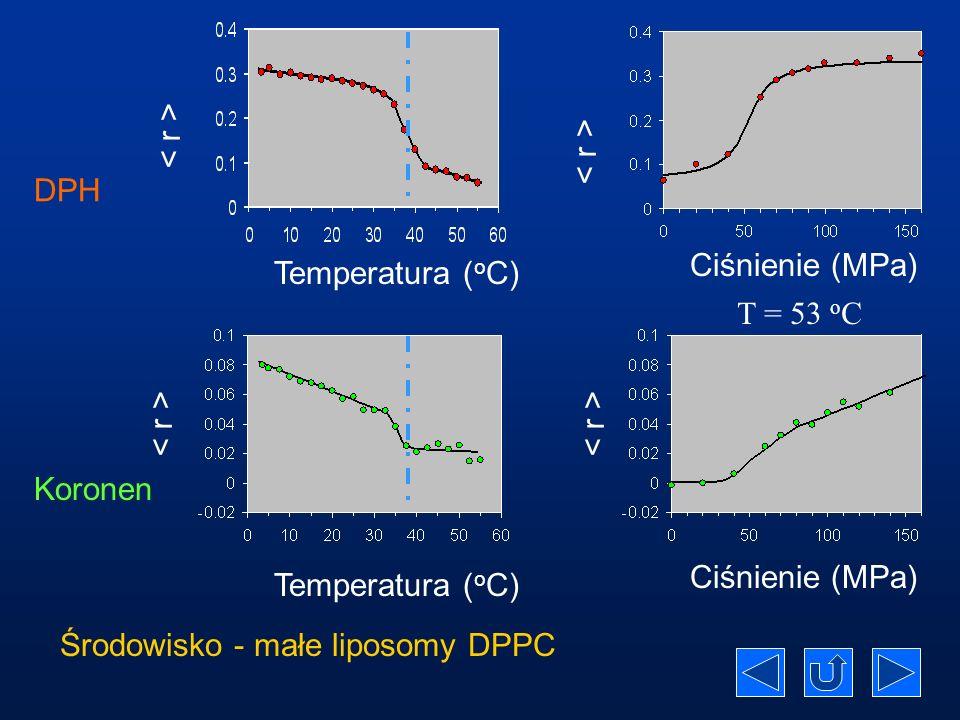 Środowisko - małe liposomy DPPC
