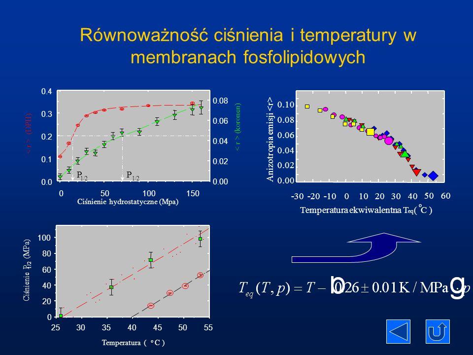 Równoważność ciśnienia i temperatury w membranach fosfolipidowych