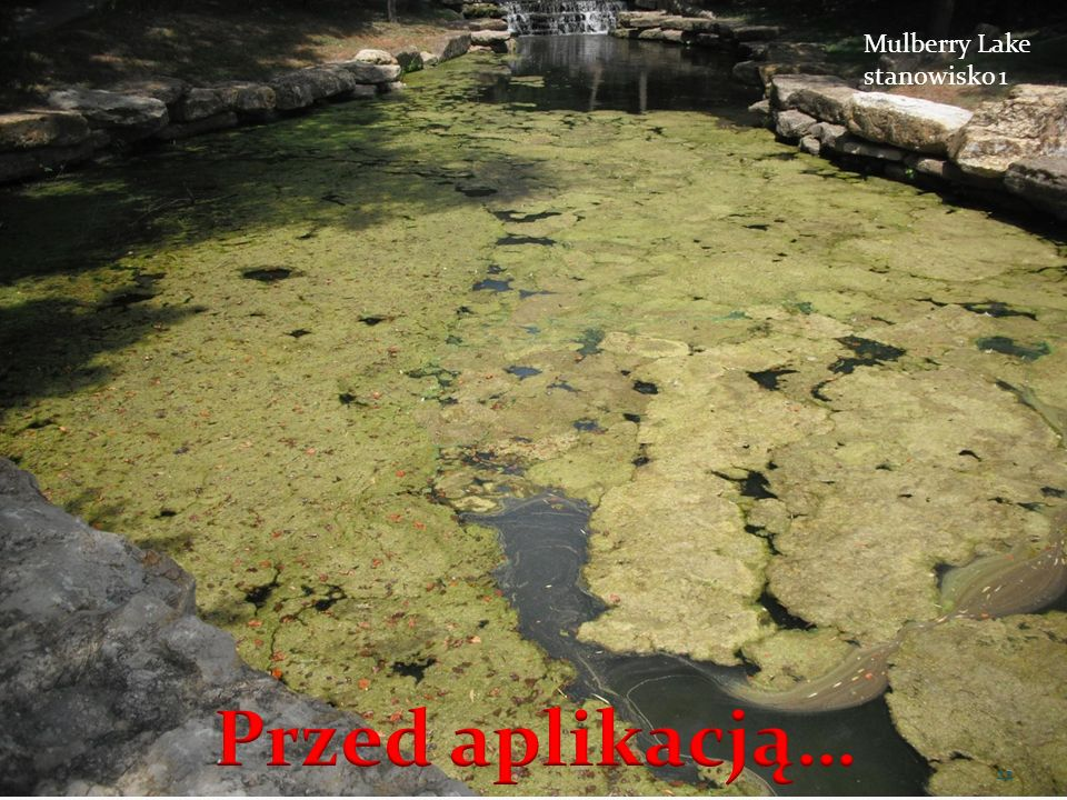 Mulberry Lake stanowisko 1 Przed aplikacją…