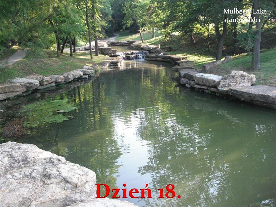 Mulberry Lake stanowisko 1 Dzień 18.