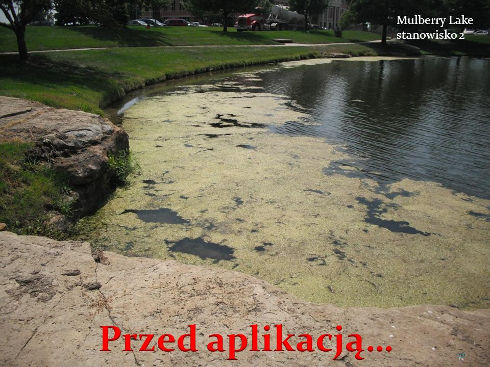 Mulberry Lake stanowisko 2 Przed aplikacją…