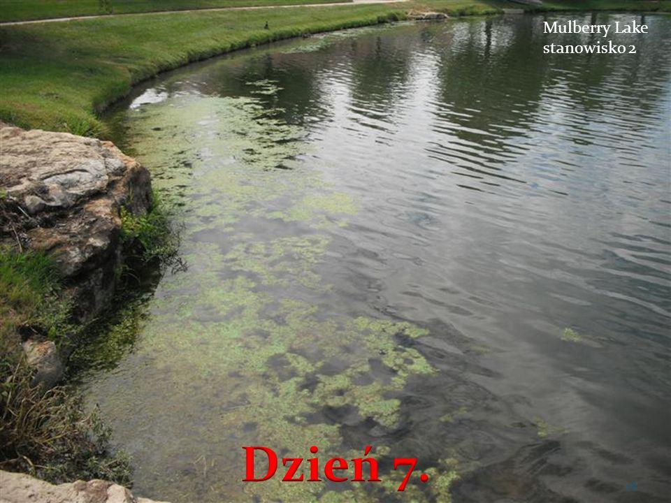 Mulberry Lake stanowisko 2 Dzień 7.