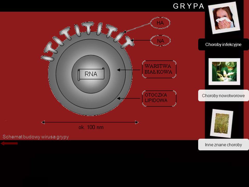 G R Y P A Schemat budowy wirusa grypy Choroby infekcyjne