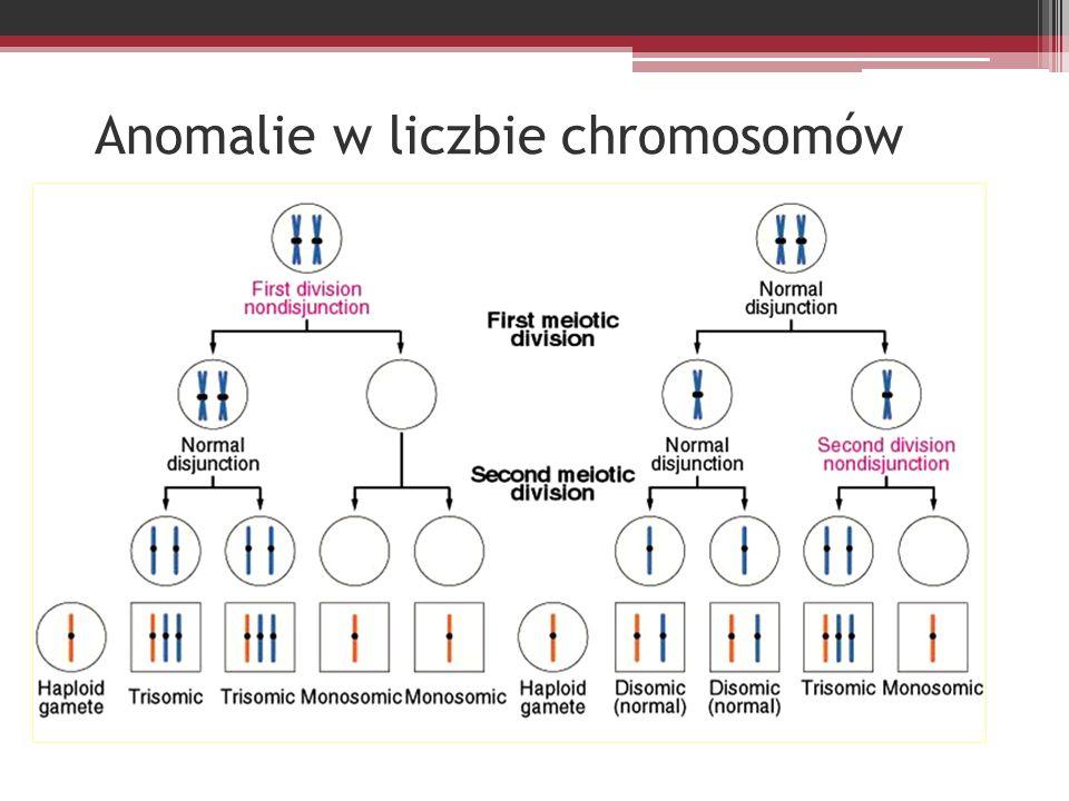 Anomalie w liczbie chromosomów