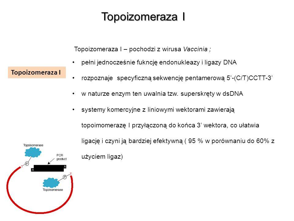 Topoizomeraza I Topoizomeraza I