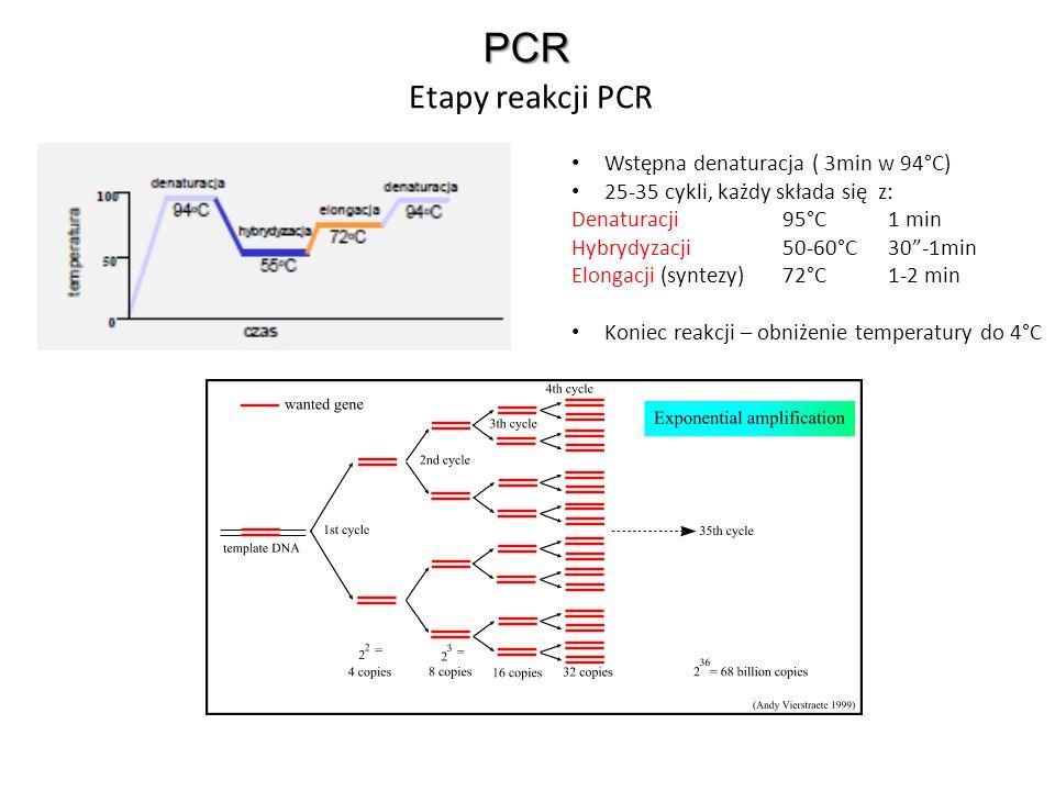 PCR Etapy reakcji PCR Wstępna denaturacja ( 3min w 94°C)