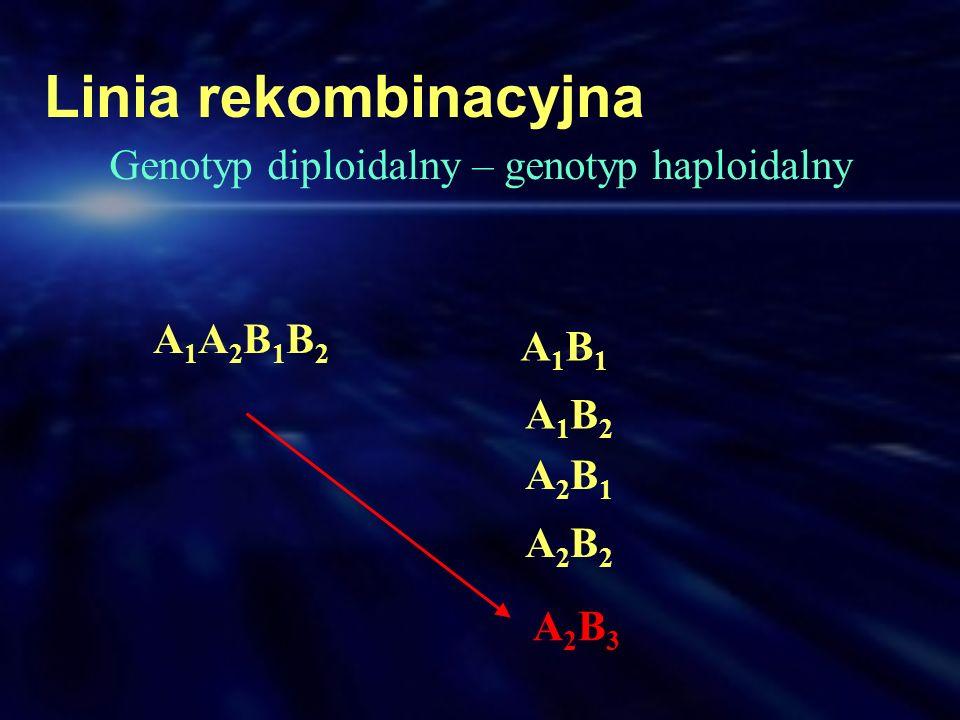 Linia rekombinacyjna Genotyp diploidalny – genotyp haploidalny