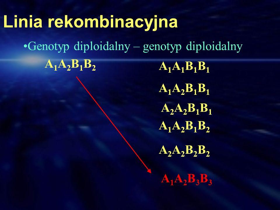 Linia rekombinacyjna Genotyp diploidalny – genotyp diploidalny