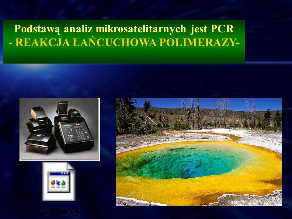 Podstawą analiz mikrosatelitarnych jest PCR