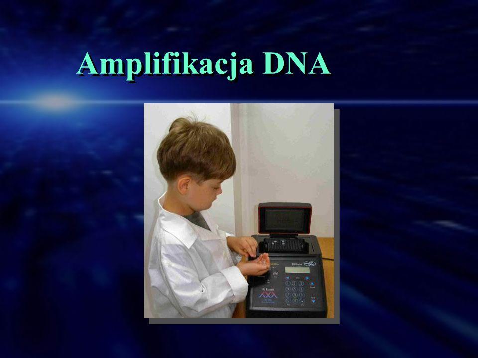 Amplifikacja DNA