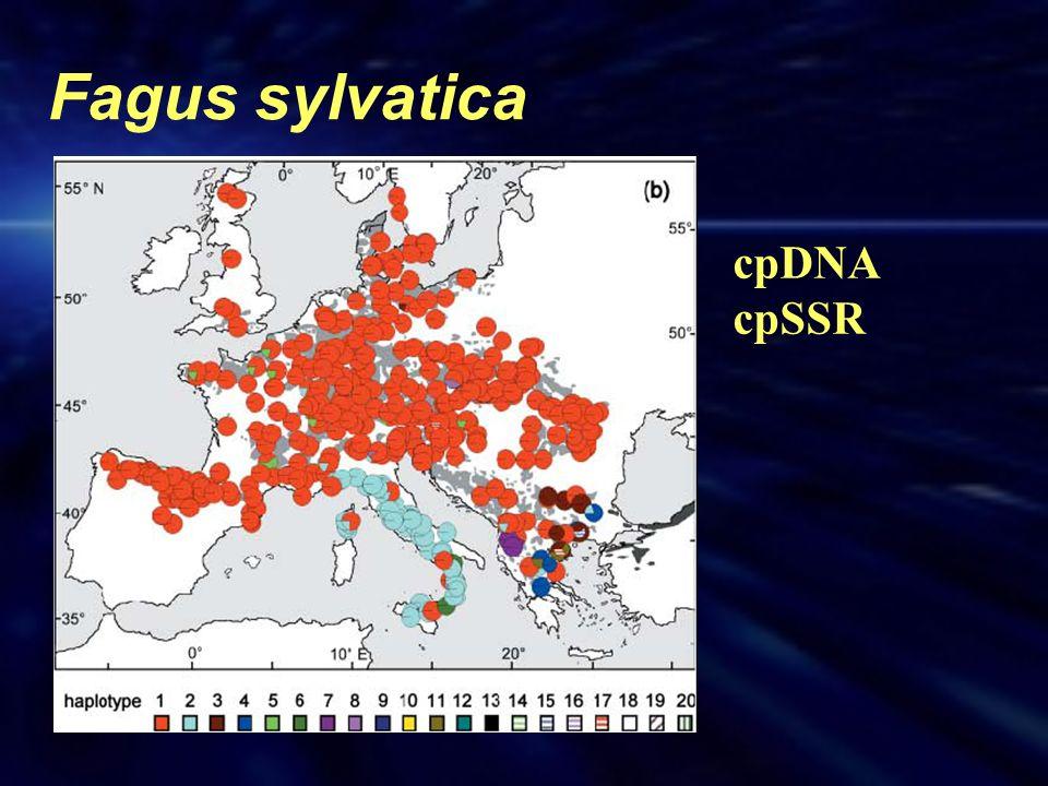 Fagus sylvatica cpDNA cpSSR