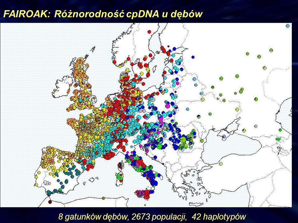 FAIROAK: Różnorodność cpDNA u dębów