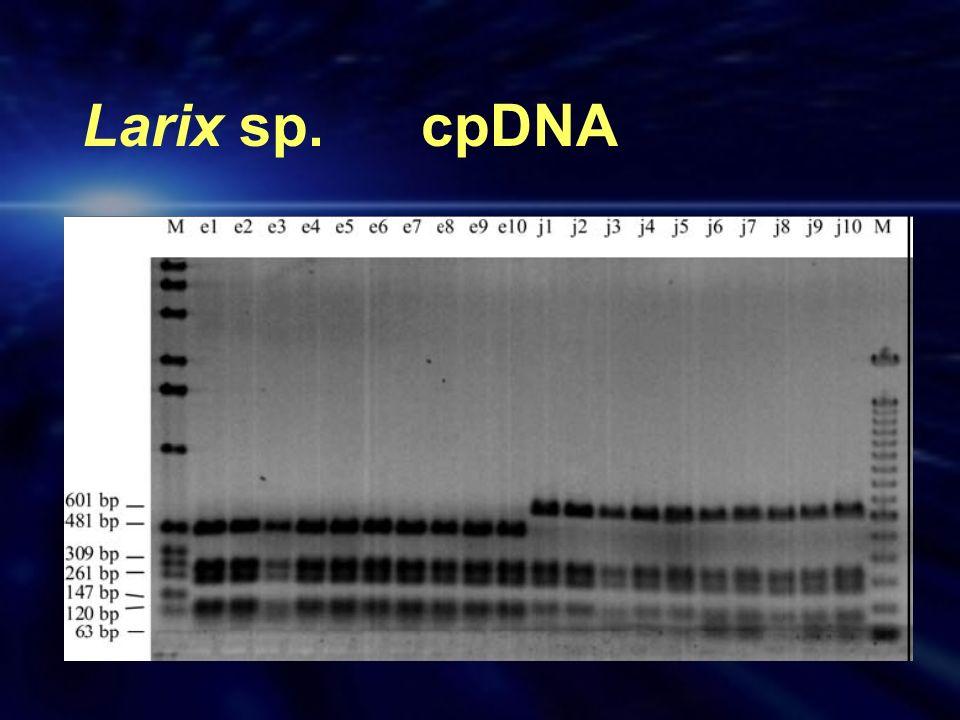 Larix sp. cpDNA