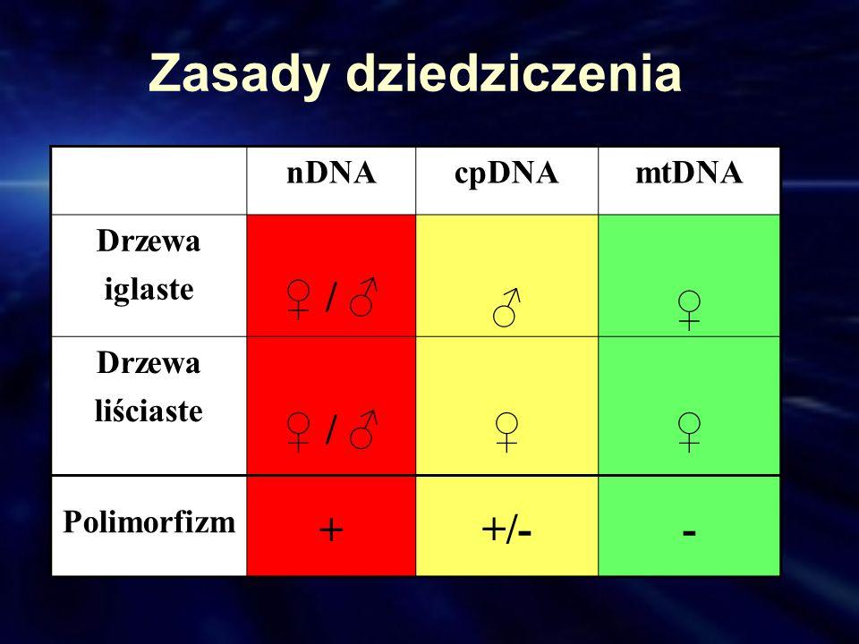Zasady dziedziczenia ♀ / ♂ ♂ ♀ + +/- - nDNA cpDNA mtDNA Drzewa iglaste