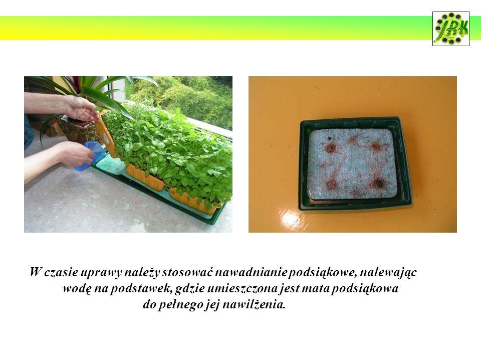 W czasie uprawy należy stosować nawadnianie podsiąkowe, nalewając