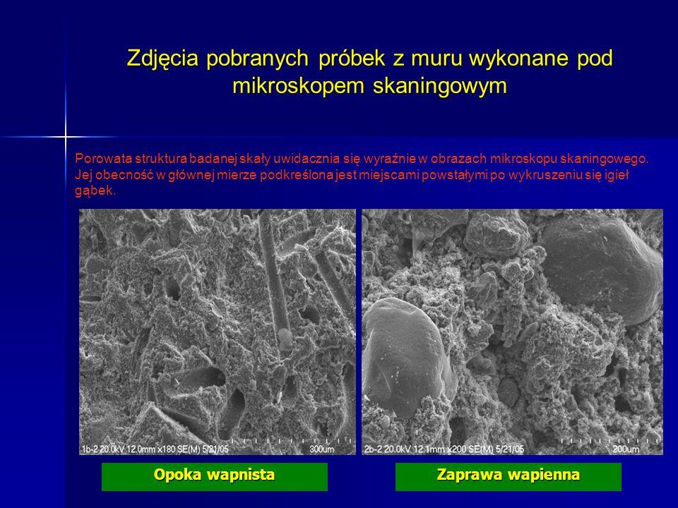 Zdjęcia pobranych próbek z muru wykonane pod mikroskopem skaningowym