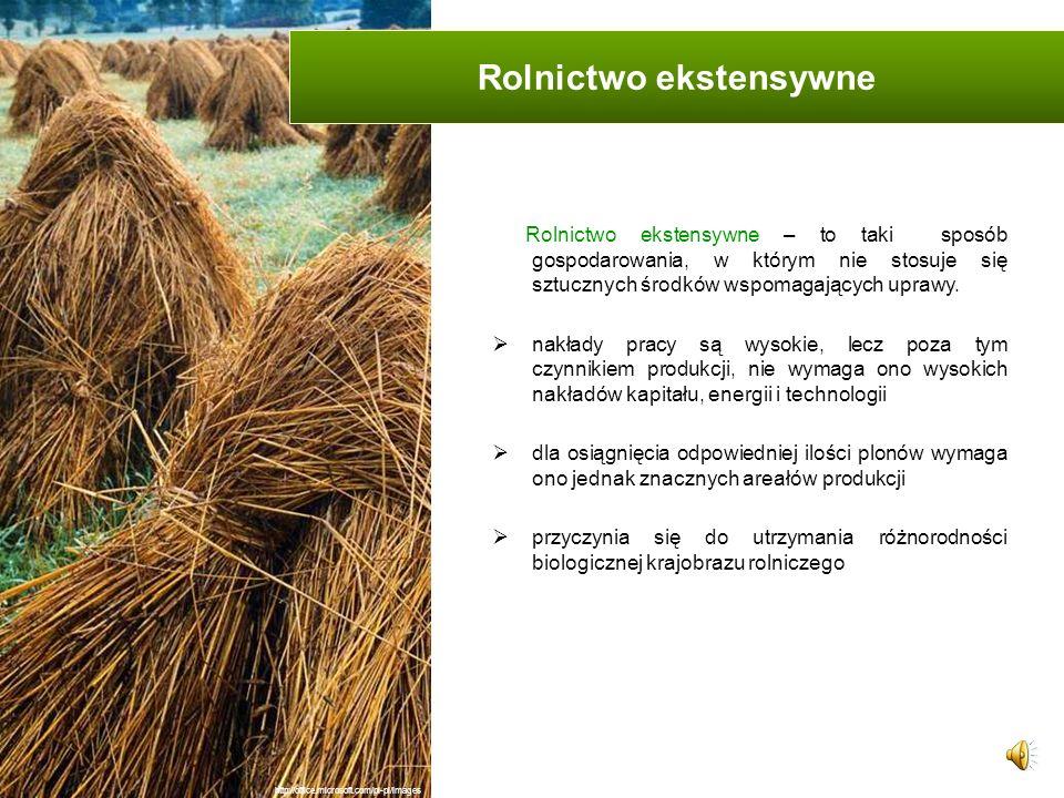 Rolnictwo ekstensywne