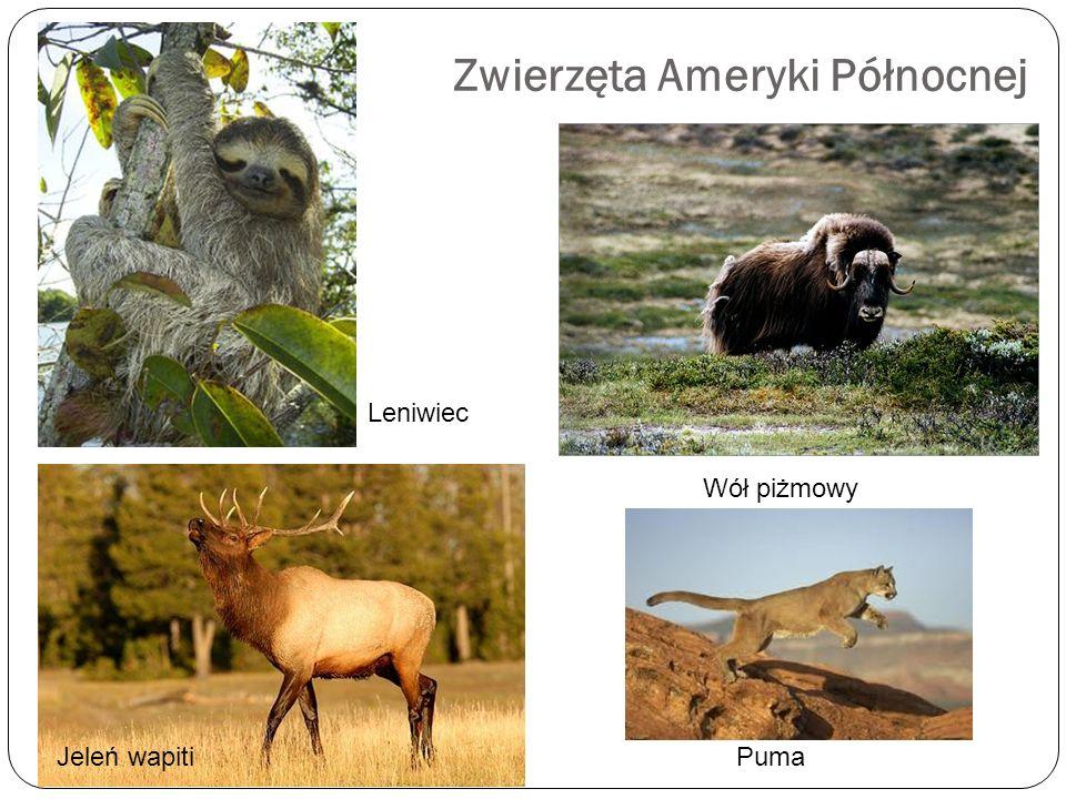 Zwierzęta Ameryki Północnej