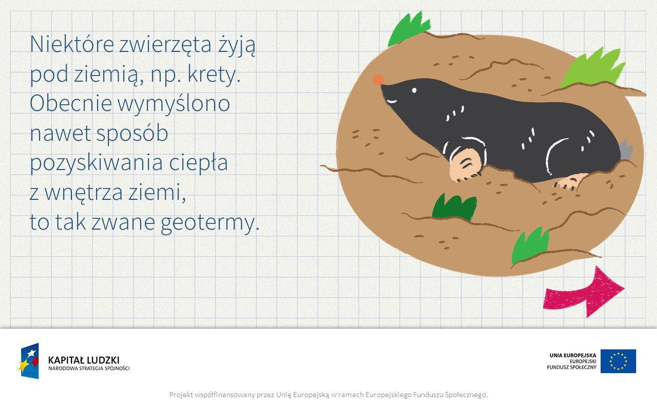 Niektóre zwierzęta żyją pod ziemią, np. krety.