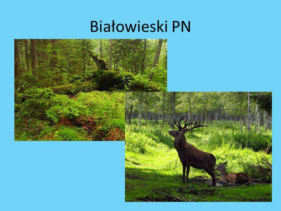 Białowieski PN