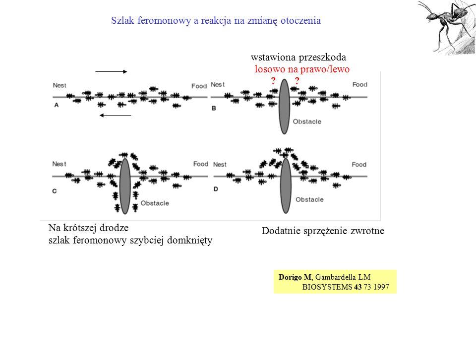 Szlak feromonowy a reakcja na zmianę otoczenia