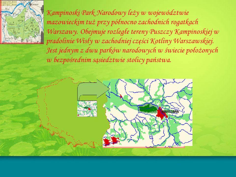 Kampinoski Park Narodowy leży w województwie mazowieckim tuż przy północno zachodnich rogatkach Warszawy.