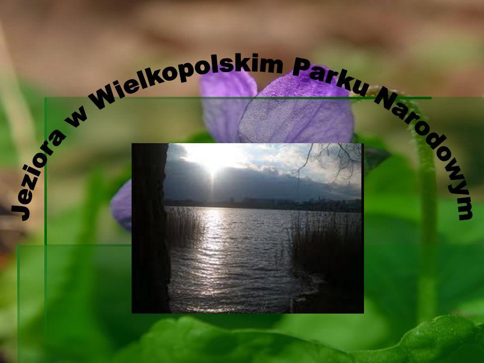 Jeziora w Wielkopolskim Parku Narodowym