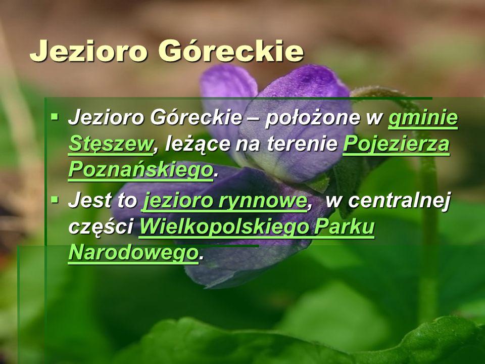 Jezioro Góreckie Jezioro Góreckie – położone w gminie Stęszew, leżące na terenie Pojezierza Poznańskiego.