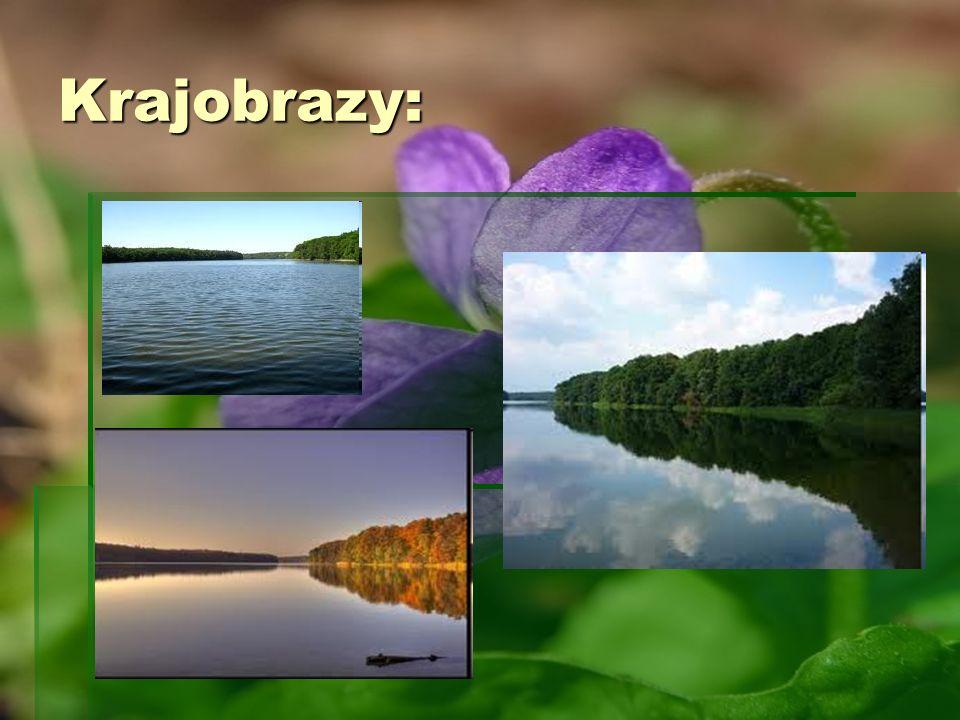 Krajobrazy: